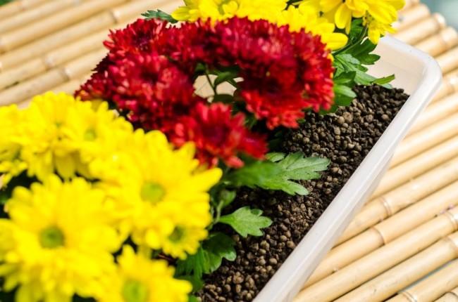 Květiny v substrátu s příměsí Liadrainu