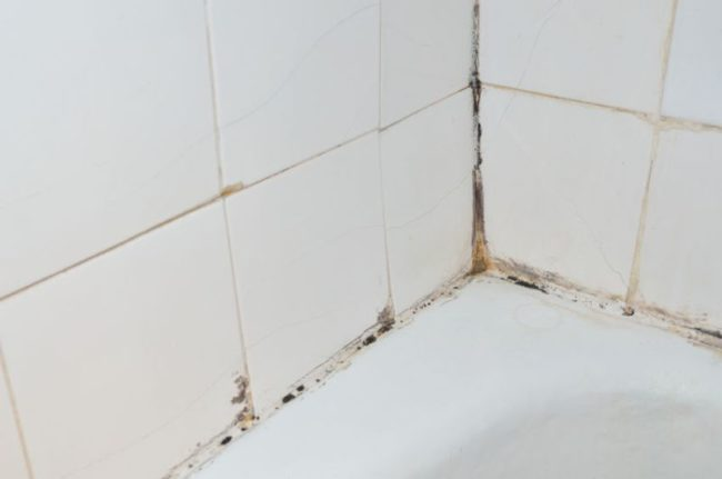 45162991 - mold and scale on old bathroom walls
