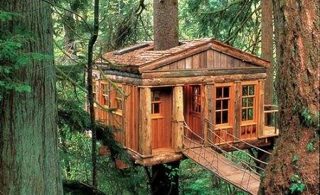Dům a strom